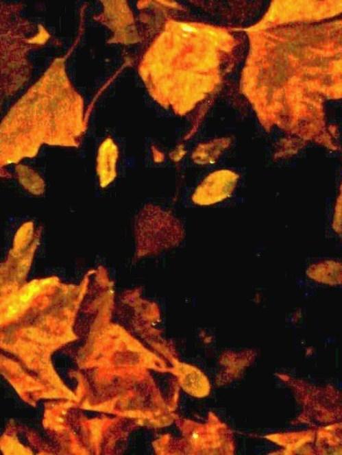 Leaf_pumpkin