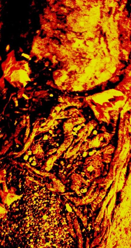 Tree_root_alien